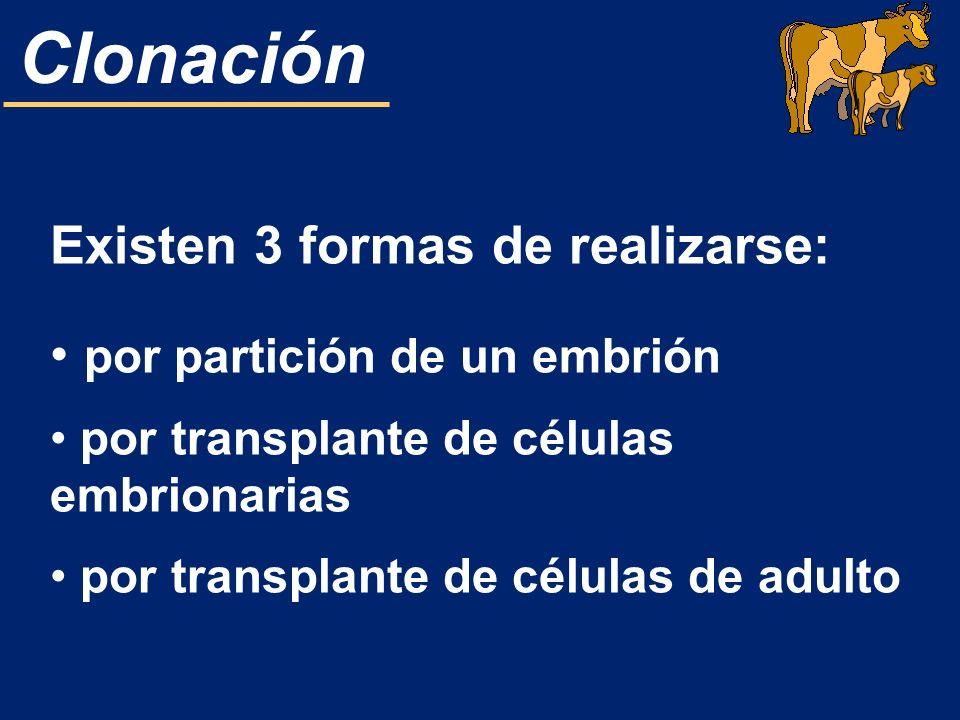 Clonación Existen 3 formas de realizarse: por partición de un embrión por transplante de células embrionarias por transplante de células de adulto
