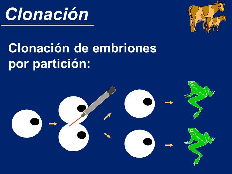 Clonación Es una manipulación de la complementariedad, base de la procreación humana.