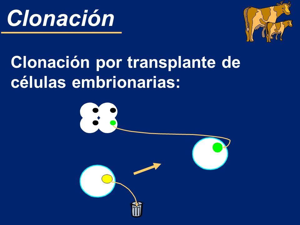 Clonación Clonación por transplante de células embrionarias: