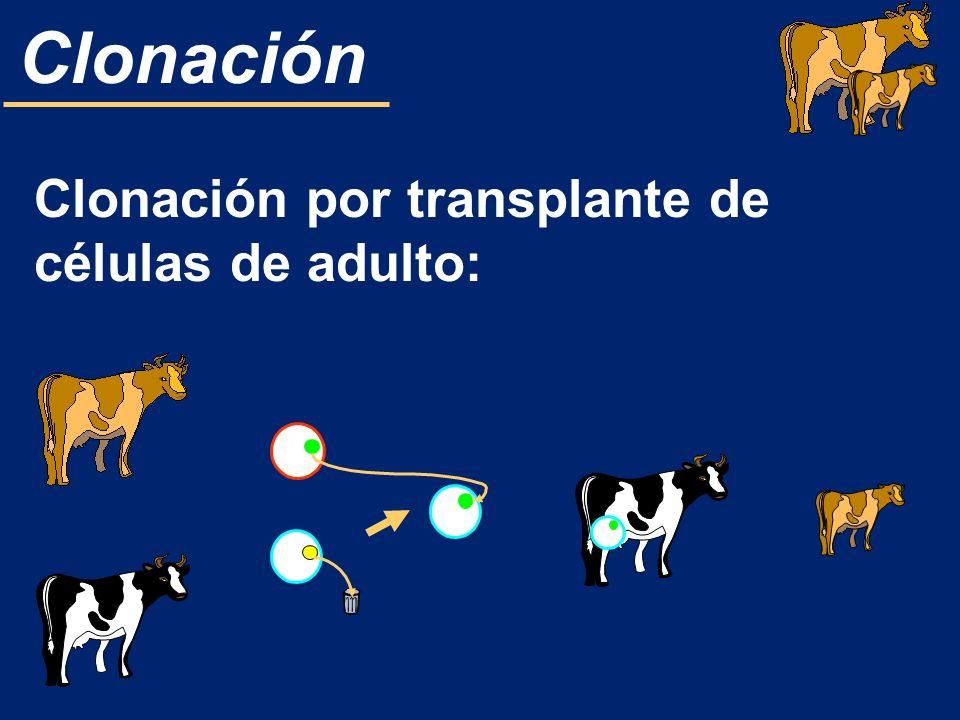 Clonación Clonación por transplante de células de adulto: