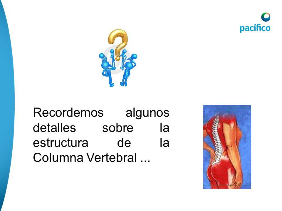 Recordemos algunos detalles sobre la estructura de la Columna Vertebral...