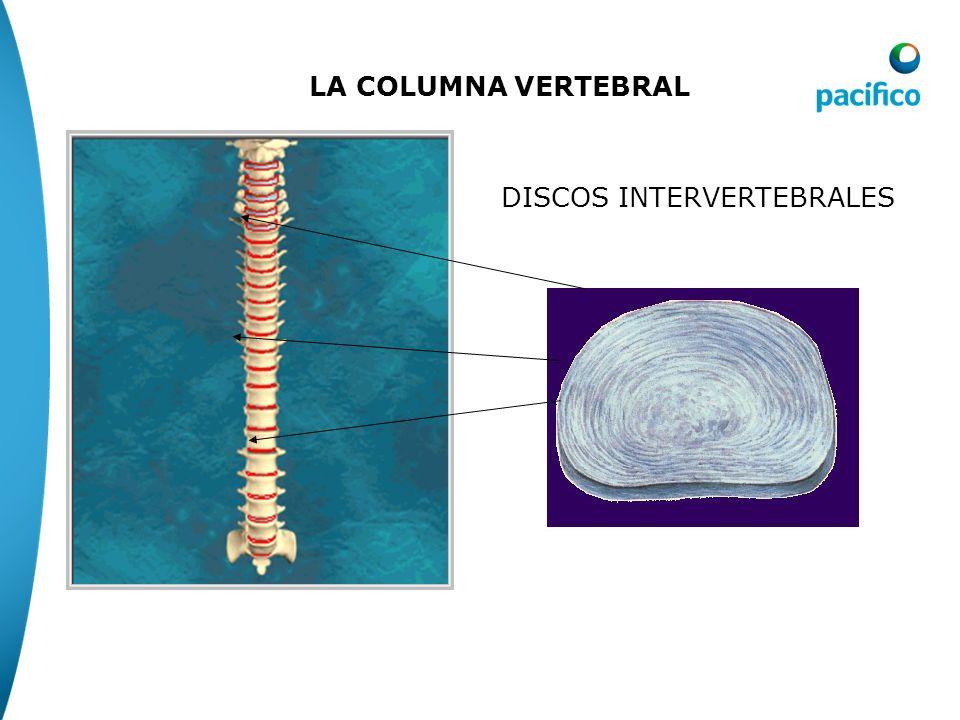 VISTA FRONTAL VISTA LATERAL VISTA POSTERIOR INTERACTIVE ATLAS – NOVARTS, 2002