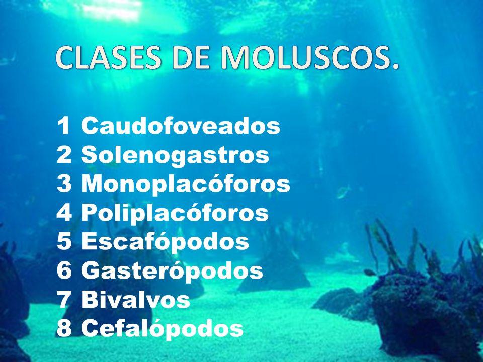 1 Caudofoveados 2 Solenogastros 3 Monoplacóforos 4 Poliplacóforos 5 Escafópodos 6 Gasterópodos 7 Bivalvos 8 Cefalópodos