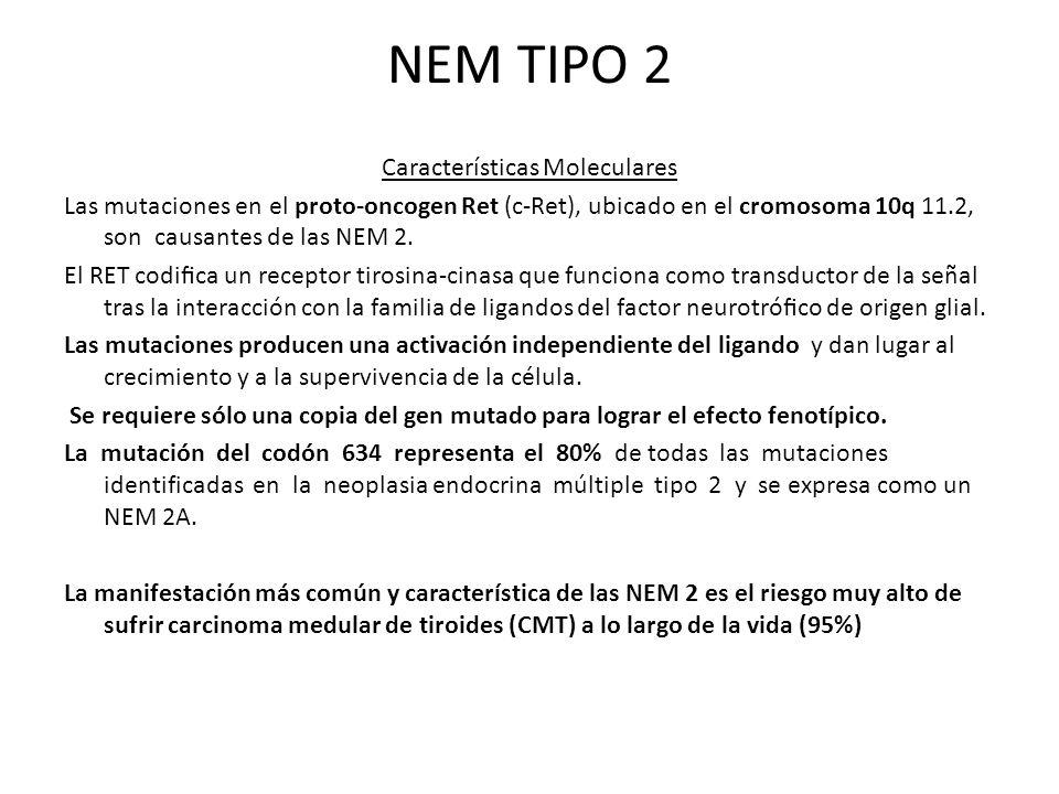 NEM TIPO 2 Características Moleculares Las mutaciones en el proto-oncogen Ret (c-Ret), ubicado en el cromosoma 10q 11.2, son causantes de las NEM 2. E
