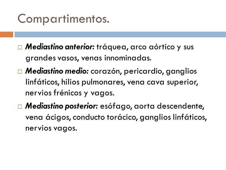 Compartimentos. Mediastino anterior: tráquea, arco aórtico y sus grandes vasos, venas innominadas. Mediastino medio: corazón, pericardio, ganglios lin