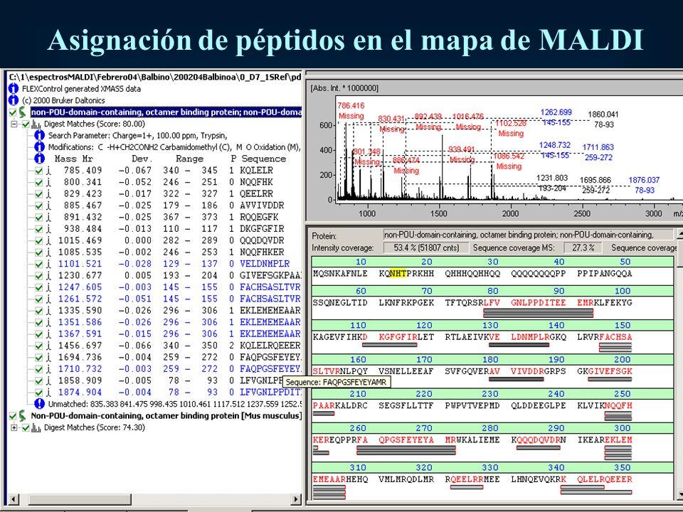 Asignación de péptidos en el mapa de MALDI