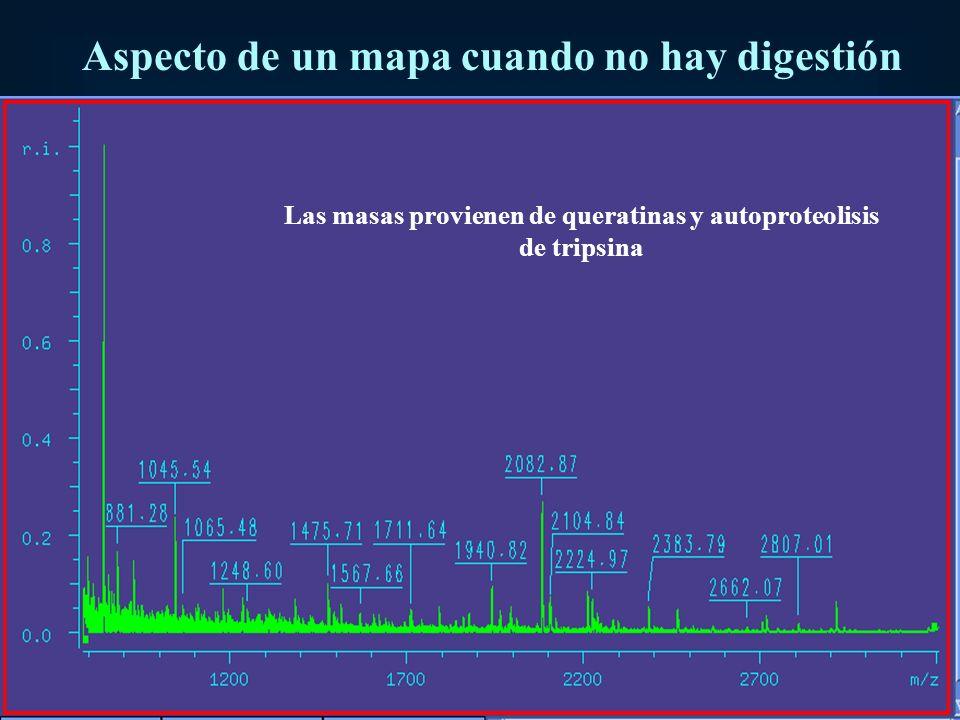 Aspecto de un mapa cuando no hay digestión Las masas provienen de queratinas y autoproteolisis de tripsina