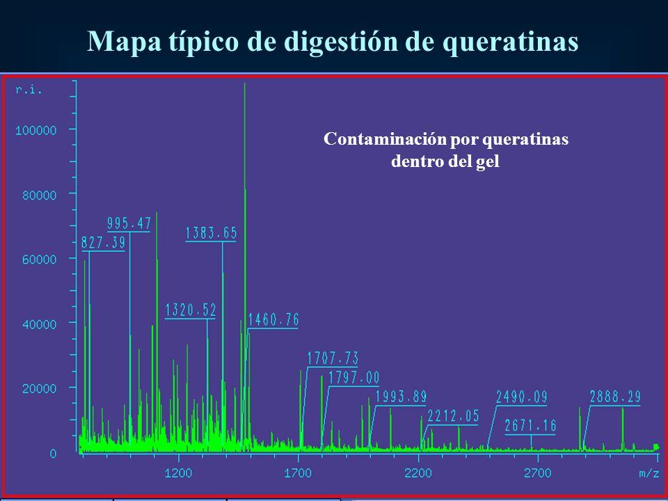 Mapa típico de digestión de queratinas Contaminación por queratinas dentro del gel