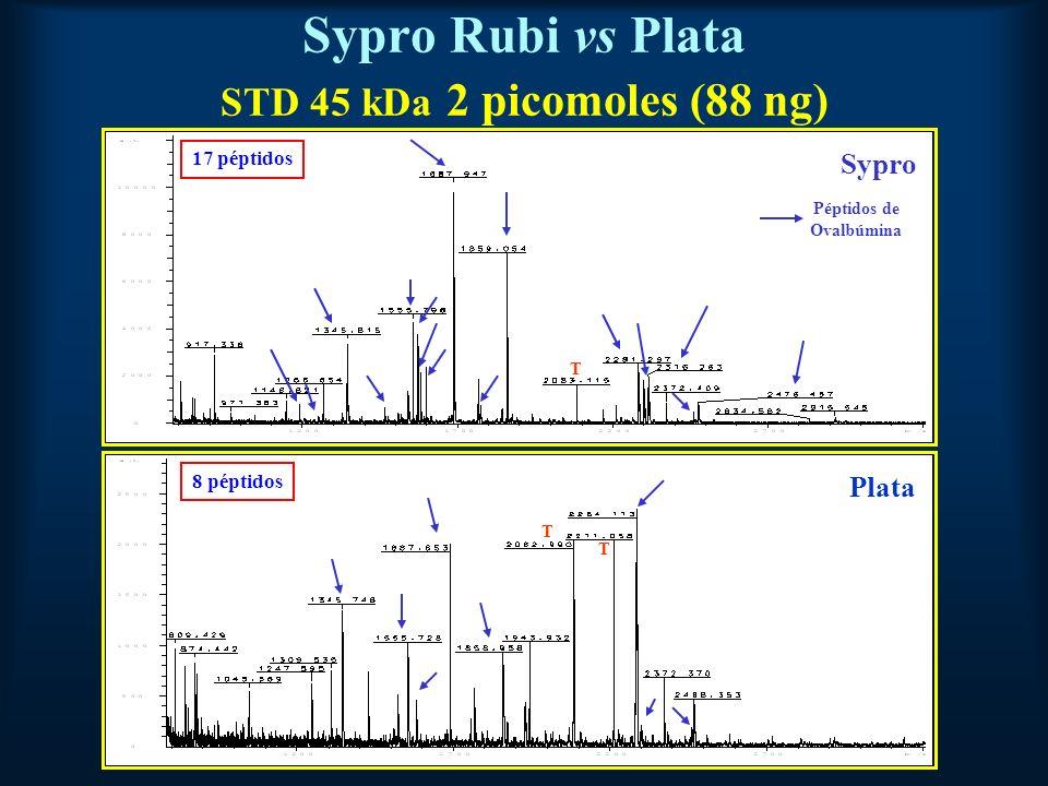 Sypro Rubi vs Plata STD 45 kDa 2 picomoles (88 ng) Sypro Plata Péptidos de Ovalbúmina T T T 17 péptidos 8 péptidos