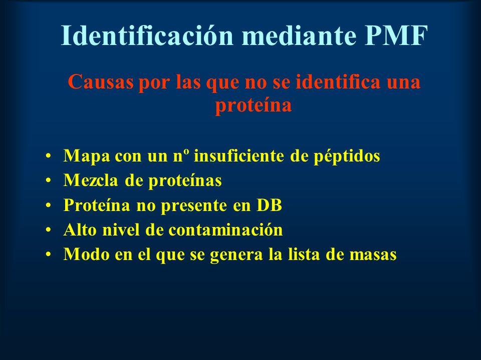 Identificación mediante PMF Causas por las que no se identifica una proteína Mapa con un nº insuficiente de péptidos Mezcla de proteínas Proteína no presente en DB Alto nivel de contaminación Modo en el que se genera la lista de masas