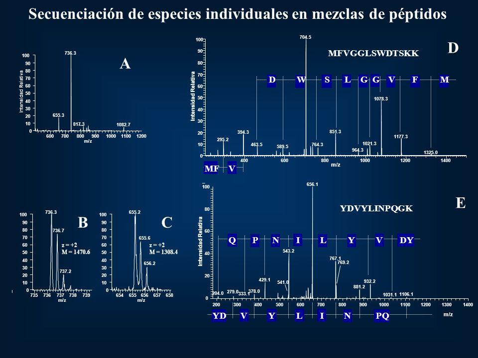 600700800900100011001200 m/z 0 10 20 30 40 50 60 70 80 90 100 Intensidad Relativa 736.3 655.3 817.3 1082.7 A Secuenciación de especies individuales en mezclas de péptidos