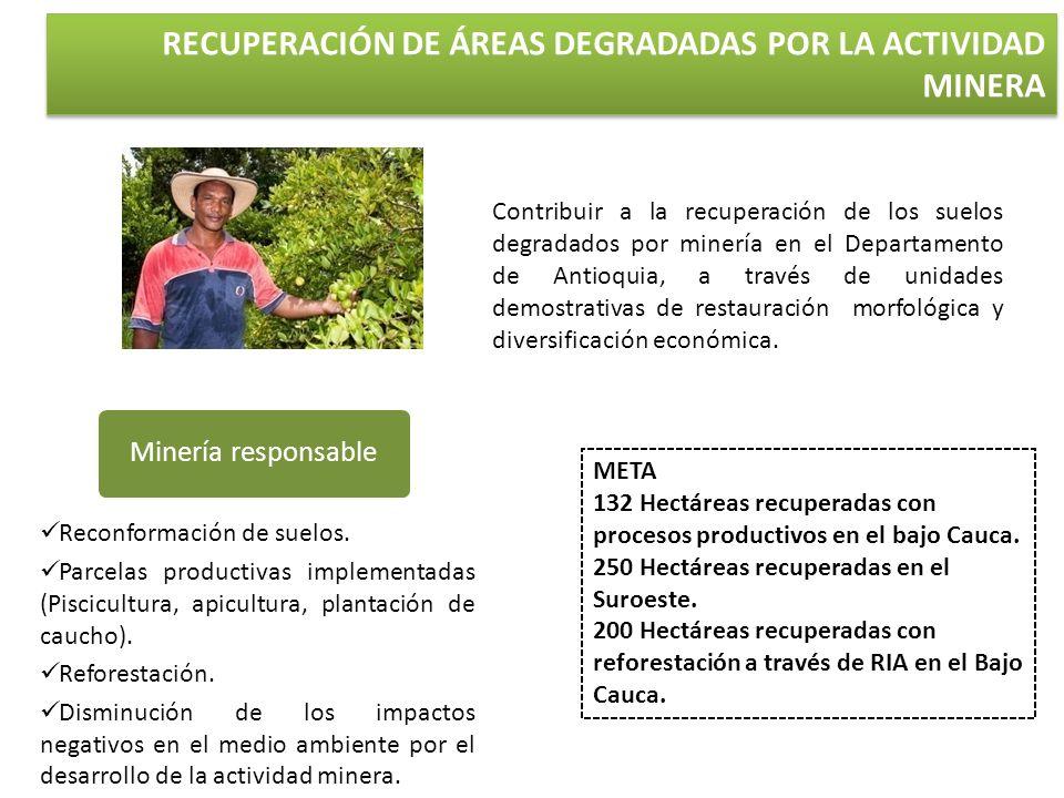 META 132 Hectáreas recuperadas con procesos productivos en el bajo Cauca. 250 Hectáreas recuperadas en el Suroeste. 200 Hectáreas recuperadas con refo