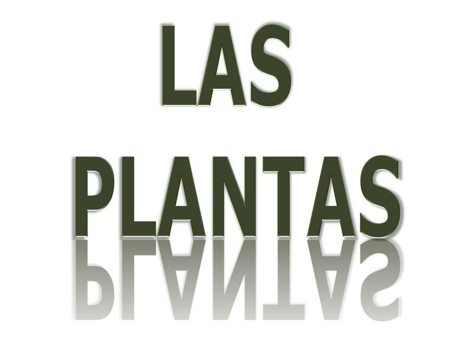 ANGIOSPERMASANGIOSPERMAS PLANTAS SIN FLORES MUSGOSMUSGOS LAS PLANTAS PLANTAS CON FLORES HELECHOSHELECHOS GIMNOSPERMASGIMNOSPERMAS ÁRBOLESÁRBOLESARBUSTOSARBUSTOSFLORESFLORES