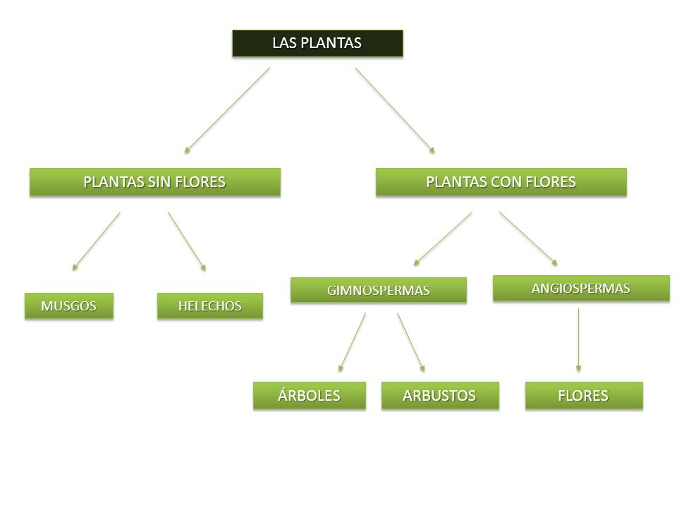 ANGIOSPERMASANGIOSPERMAS PLANTAS SIN FLORES MUSGOSMUSGOS LAS PLANTAS PLANTAS CON FLORES HELECHOSHELECHOS GIMNOSPERMASGIMNOSPERMAS ÁRBOLESÁRBOLESARBUST