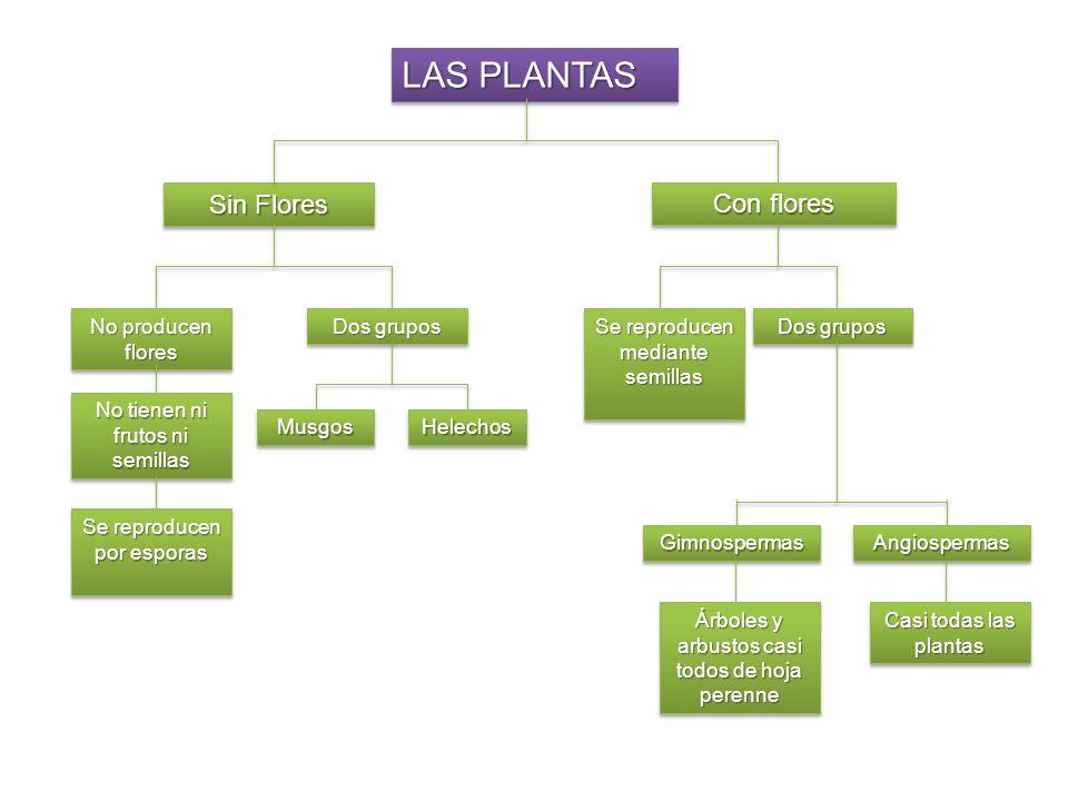 Las Plantas Angiospermas forman el grupo más extenso del reino de las Plantas.Las Plantas Angiospermas forman el grupo más extenso del reino de las Plantas.