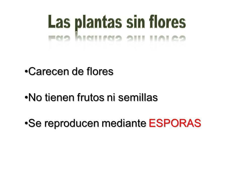 Carecen de floresCarecen de flores No tienen frutos ni semillasNo tienen frutos ni semillas Se reproducen mediante ESPORASSe reproducen mediante ESPOR