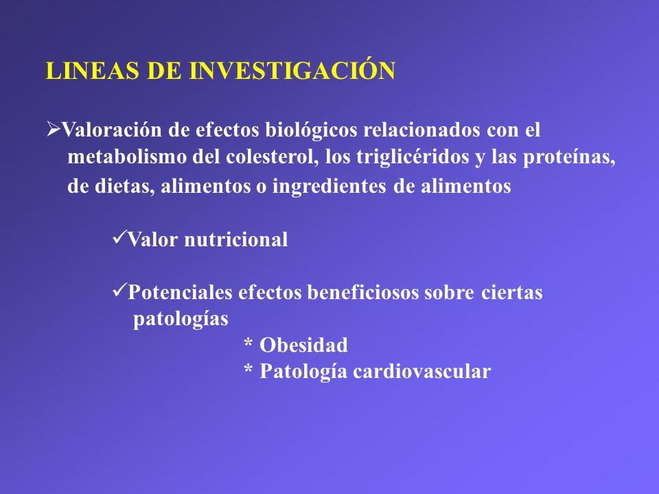 LINEAS DE INVESTIGACIÓN Valoración de efectos biológicos relacionados con el metabolismo del colesterol, los triglicéridos y las proteínas, de dietas, alimentos o ingredientes de alimentos Valor nutricional Potenciales efectos beneficiosos sobre ciertas patologías * Obesidad * Patología cardiovascular