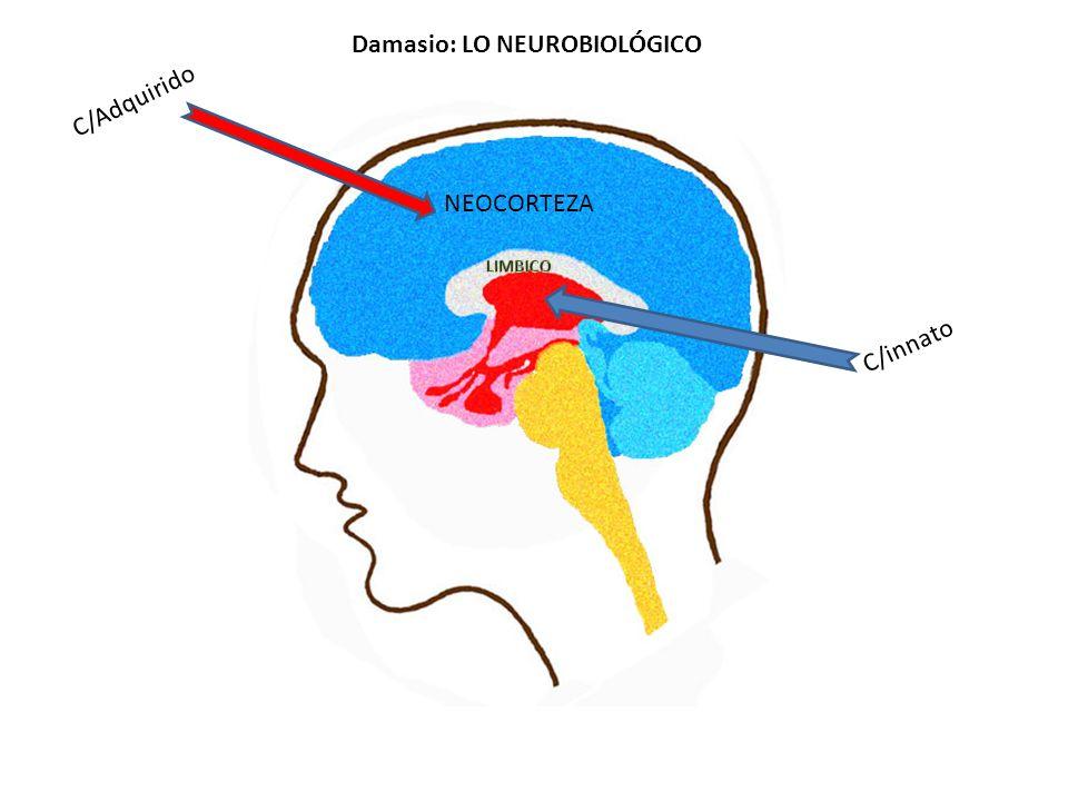 C/innato C/Adquirido NEOCORTEZA Damasio: LO NEUROBIOLÓGICO