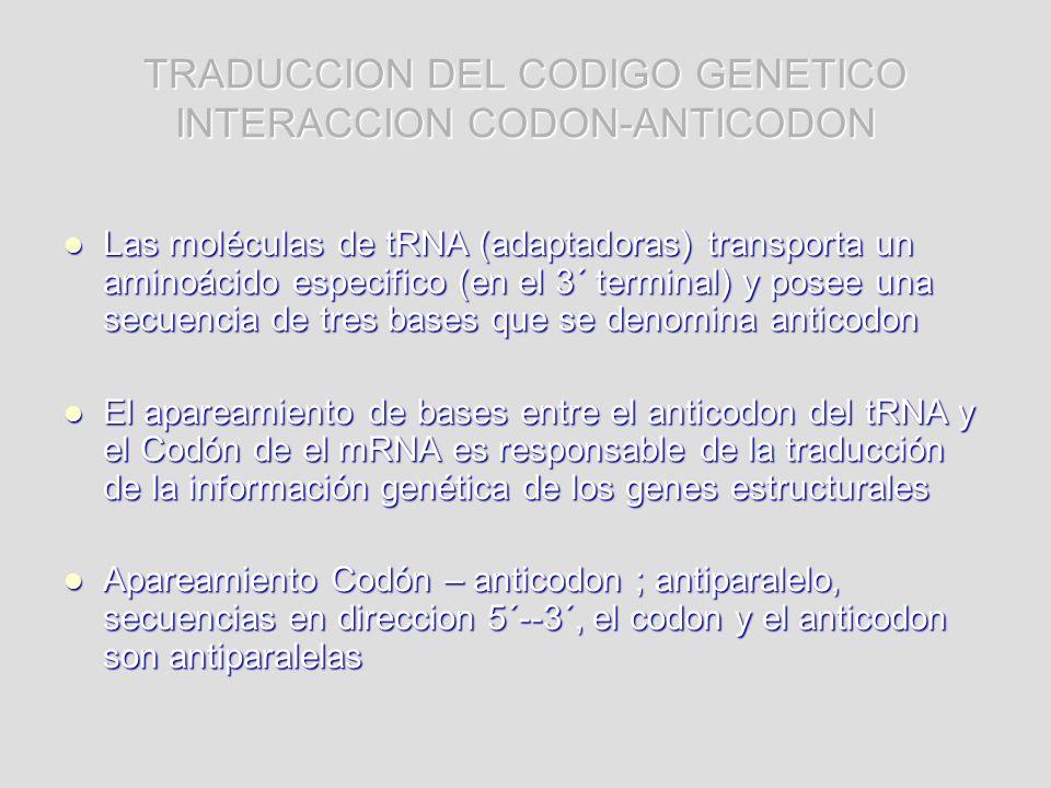 TRADUCCION DEL CODIGO GENETICO INTERACCION CODON-ANTICODON Las moléculas de tRNA (adaptadoras) transporta un aminoácido especifico (en el 3´ terminal)