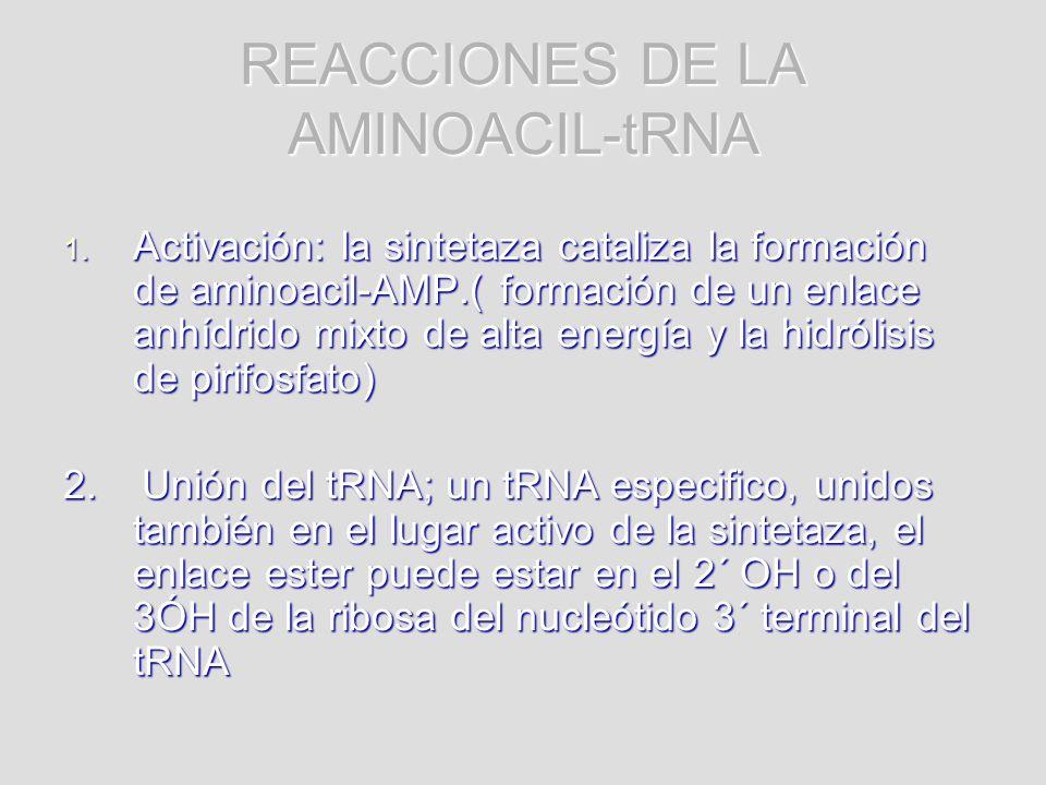 REACCIONES DE LA AMINOACIL-tRNA 1. Activación: la sintetaza cataliza la formación de aminoacil-AMP.( formación de un enlace anhídrido mixto de alta en