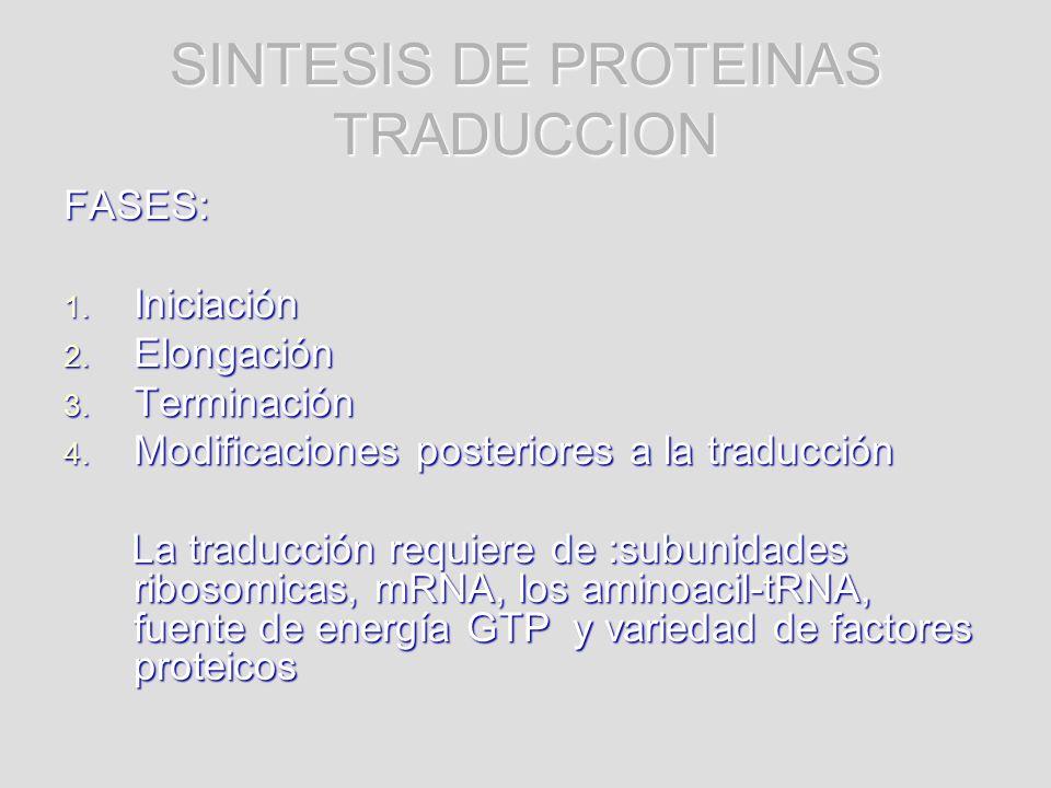 SINTESIS DE PROTEINAS TRADUCCION FASES: 1. Iniciación 2. Elongación 3. Terminación 4. Modificaciones posteriores a la traducción La traducción requier