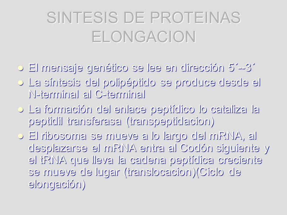 SINTESIS DE PROTEINAS ELONGACION El mensaje genético se lee en dirección 5´--3´ El mensaje genético se lee en dirección 5´--3´ La síntesis del polipép