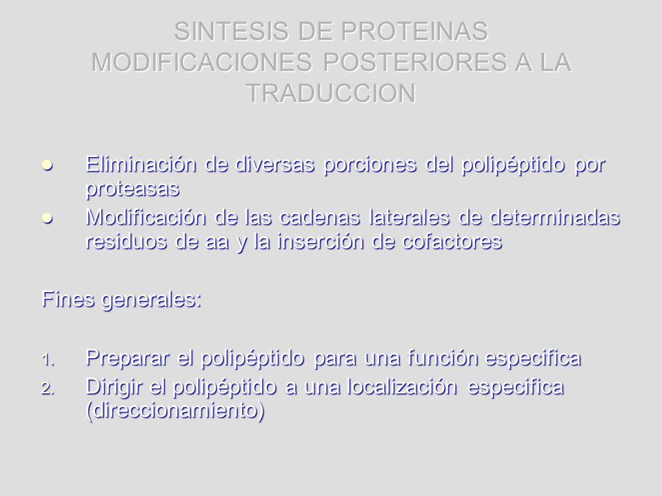 SINTESIS DE PROTEINAS MODIFICACIONES POSTERIORES A LA TRADUCCION Eliminación de diversas porciones del polipéptido por proteasas Eliminación de divers