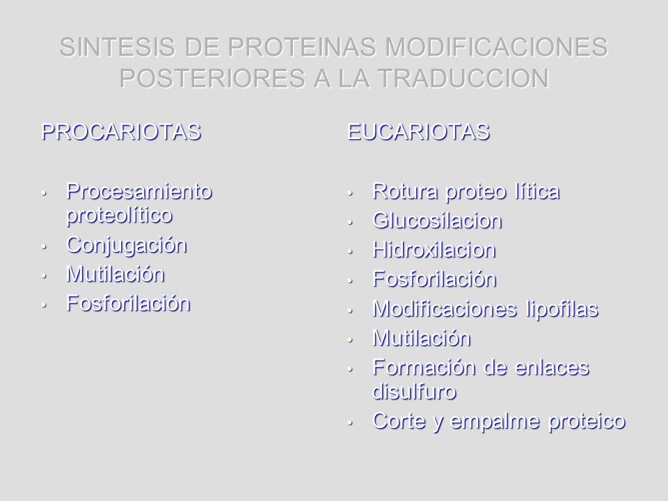 SINTESIS DE PROTEINAS MODIFICACIONES POSTERIORES A LA TRADUCCION PROCARIOTAS Procesamiento proteolítico Procesamiento proteolítico Conjugación Conjuga