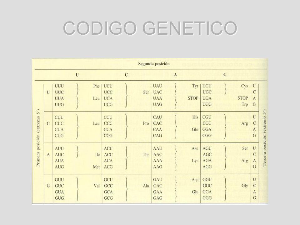Para la síntesis del complemento celular de proteínas se requiere de 20 diferentes aminoácidos Para la síntesis del complemento celular de proteínas se requiere de 20 diferentes aminoácidos Debe haber 20 codones distintos que constituyen el código genético Debe haber 20 codones distintos que constituyen el código genético Solo existen cuatro nucleótidos diferentes en el mRNA, cada codon incluye mas de un nucleótido de purina o de pirimidina Solo existen cuatro nucleótidos diferentes en el mRNA, cada codon incluye mas de un nucleótido de purina o de pirimidina Codones de tres nucleótidos : 64 codones específicos Codones de tres nucleótidos : 64 codones específicos Código genético : código de tripletes Código genético : código de tripletes
