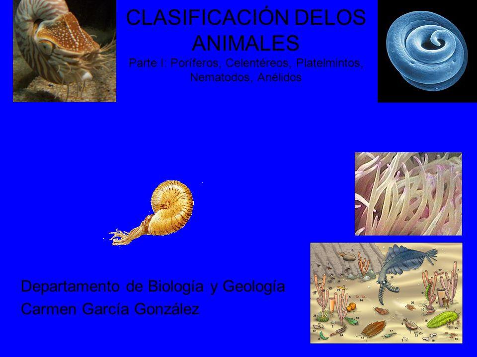 CLASIFICACIÓN DELOS ANIMALES Parte I: Poríferos, Celentéreos, Platelmintos, Nematodos, Anélidos Departamento de Biología y Geología Carmen García Gonz