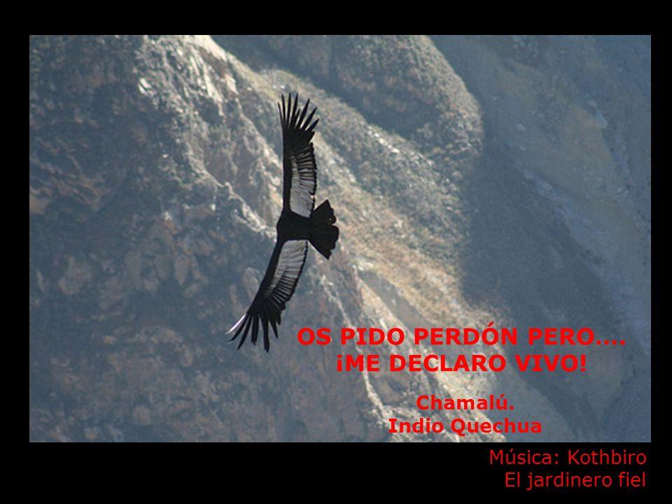 OS PIDO PERDÓN PERO…. ¡ME DECLARO VIVO! Chamalú. Indio Quechua Música: Kothbiro El jardinero fiel