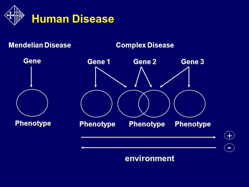 Gene Gene 1Gene 2Gene 3 Phenotype Mendelian DiseaseComplex Disease + - environment Human Disease