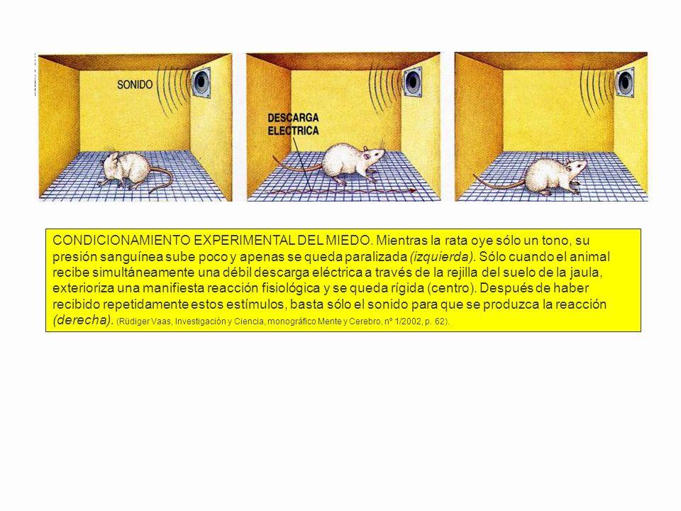 El procesamiento de la informacíón (IV) Arcos reflejos/Actos reflejos/Actos voluntarios §Acto reflejo: Reacción simple que transcurre rápidamente (afe