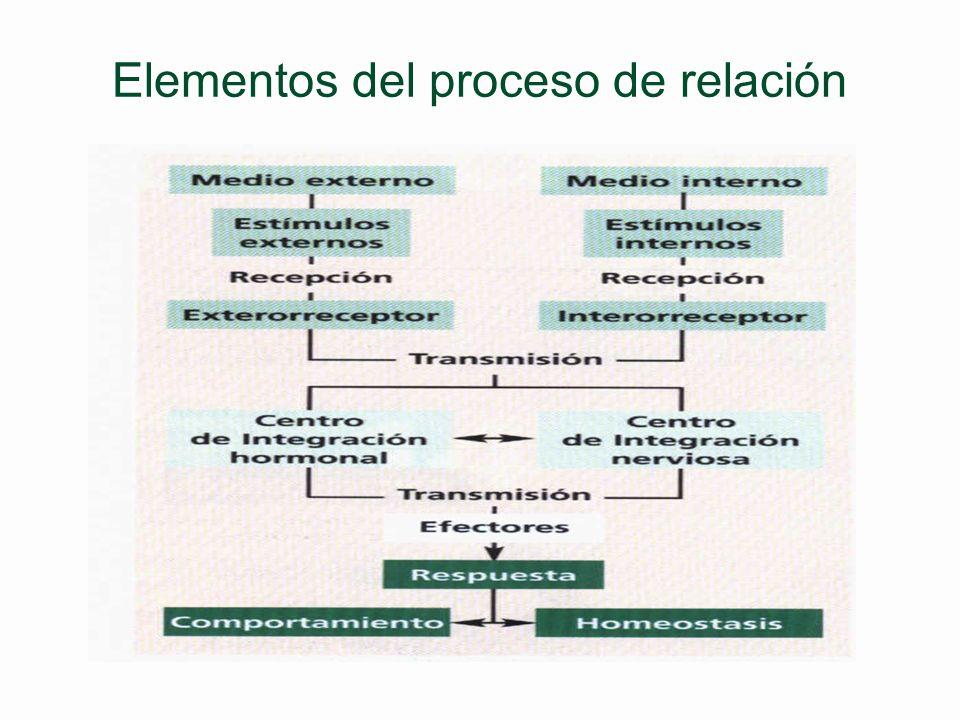 Fisiología comparada_Relación CRÉDITOS Autoría de la presentación en Power Point: Juan Ignacio Noriega Iglesias Texto (con modificaciones) e imágenes
