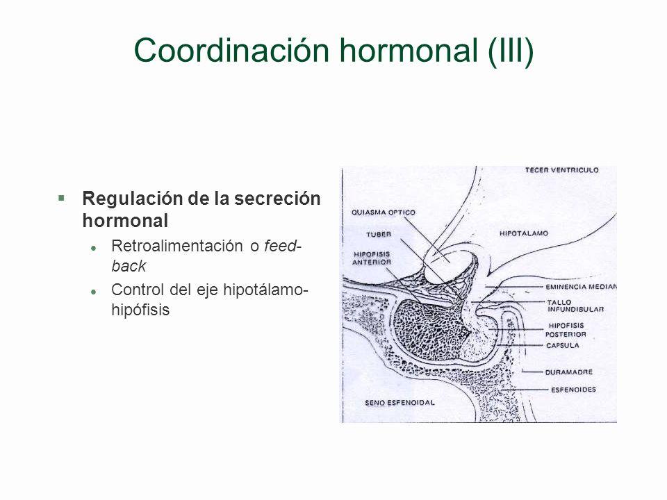 Coordinación hormonal (II) §Las hormonas (cont.) §Efectos l Antagónicos Regulación glucemia –Insulina (céls. ß de IL): Contra hiperglucemia –Glucagón