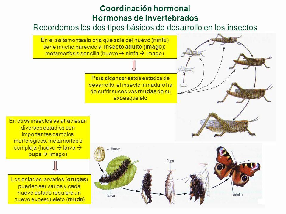 Coordinación hormonal (IV) TRF Feed-back