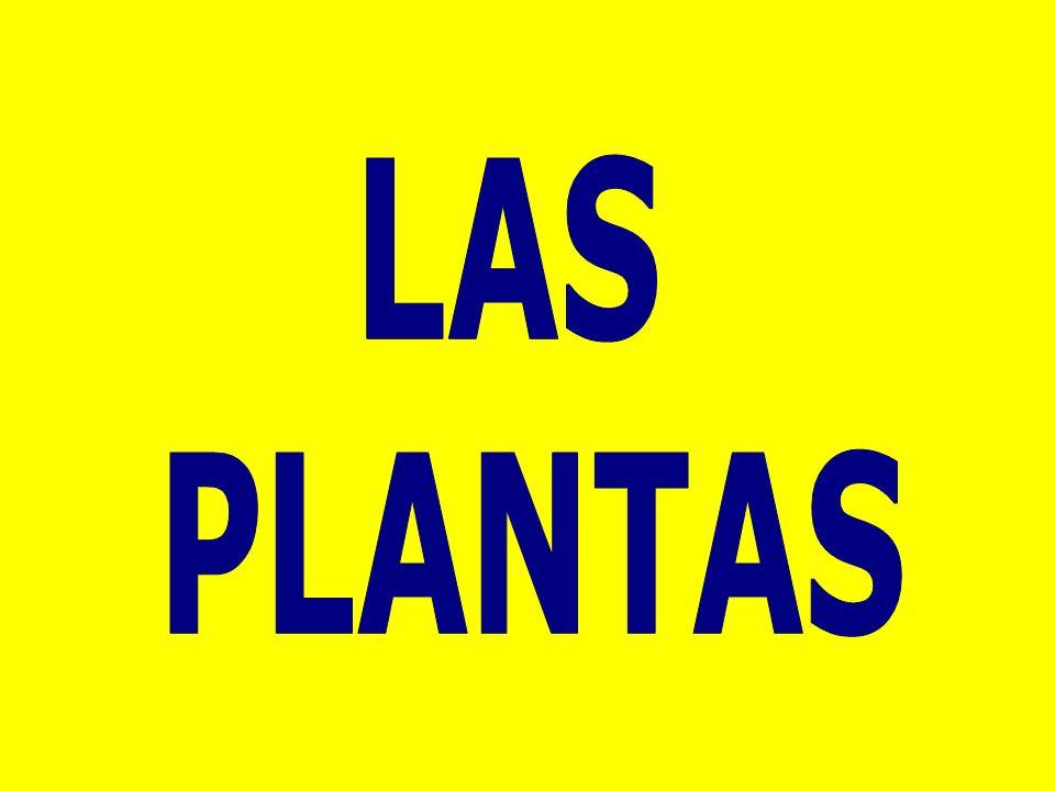 LAS PLANTAS – REPRODUCCIÓN http://www.clarionweb.es/5_curso/c_medio/cm506/cm5060 1.htm http://www.aplicaciones.info/naturales/natura08.htm http://www.juntadeandalucia.es/averroes/carambolo/WEB% 20JCLIC2/Agrega/Medio/Las%20plantas/contenido/cm07_oa 04_es/index.htmlhttp://www.juntadeandalucia.es/averroes/carambolo/WEB% 20JCLIC2/Agrega/Medio/Las%20plantas/contenido/cm07_oa 04_es/index.html (VÍDEO) http://cplosangeles.juntaextremadura.net/web/edilim/tercer _ciclo/cmedio/las_plantas/la_reproduccion_sexual_plantas/la _reproduccion_sexual_plantas.html http://cplosangeles.juntaextremadura.net/web/edilim/tercer _ciclo/cmedio/las_plantas/la_reproduccion_asexual_plantas/l a_reproduccion_asexual_plantas.html