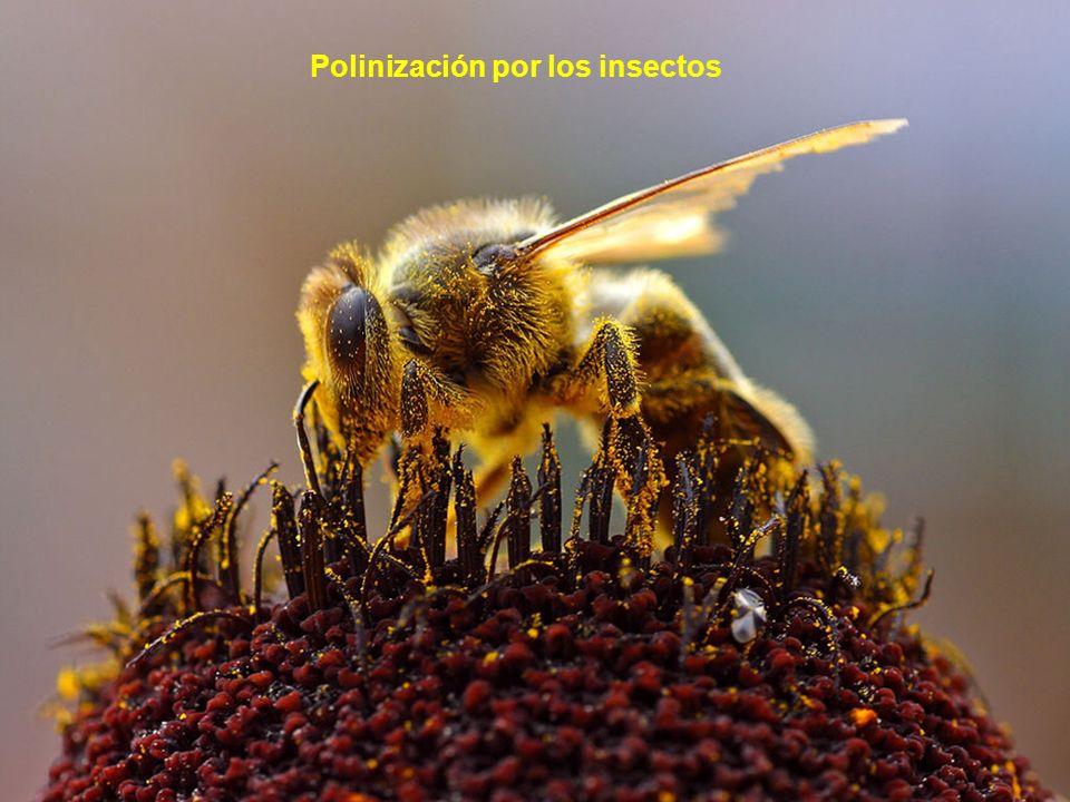 Polinización por los insectos