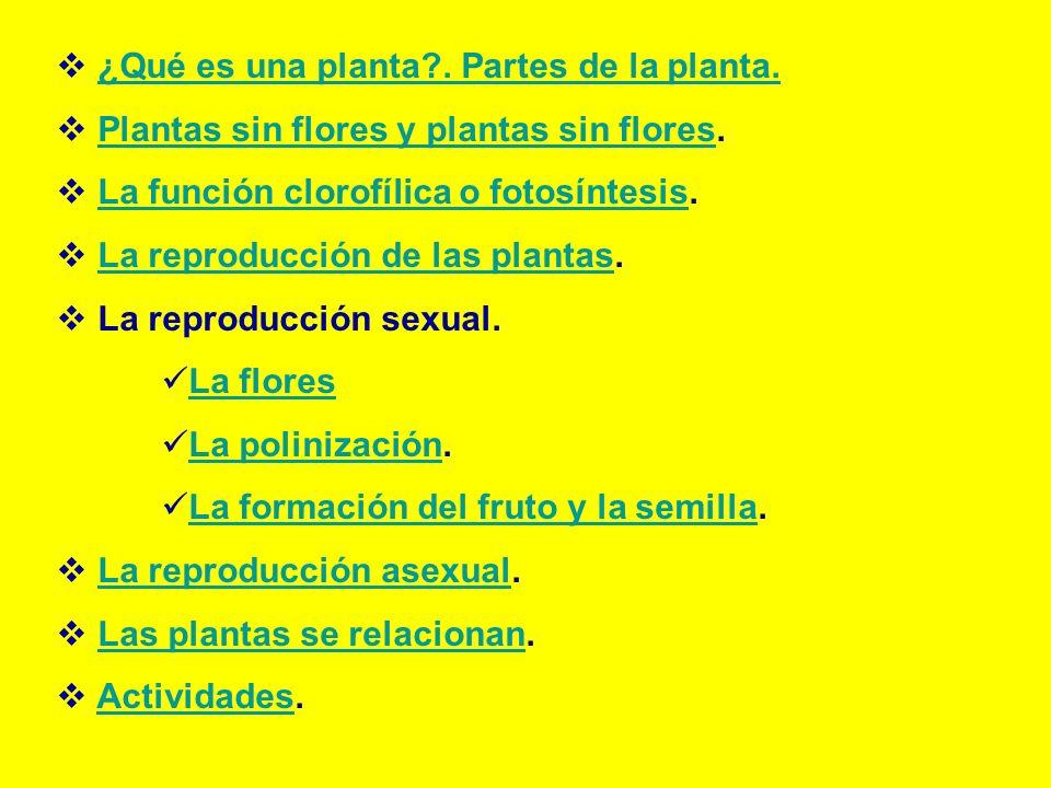 ¿Qué es una planta?. Partes de la planta. Plantas sin flores y plantas sin flores.Plantas sin flores y plantas sin flores La función clorofílica o fot