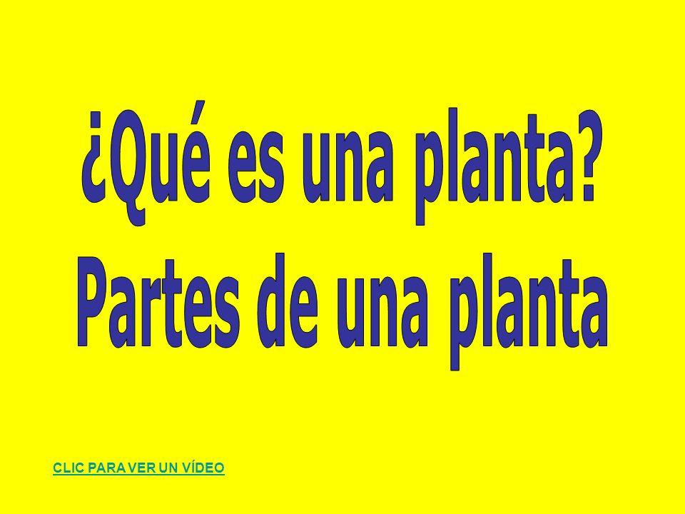 LAS PLANTAS – ASPECTOS GENERALES http://thales.cica.es/rd/Recursos/rd99/ed99-0574-02/ed99-0574-02.html http://www.genmagic.net/natural/plant1c.swf http://ntic.educacion.es/w3//eos/MaterialesEducativos/primaria/conocimie nto/reinovegetal/actividades/activiframes.html http://cplosangeles.juntaextremadura.net/web/cmedio5/las_plantas/index.