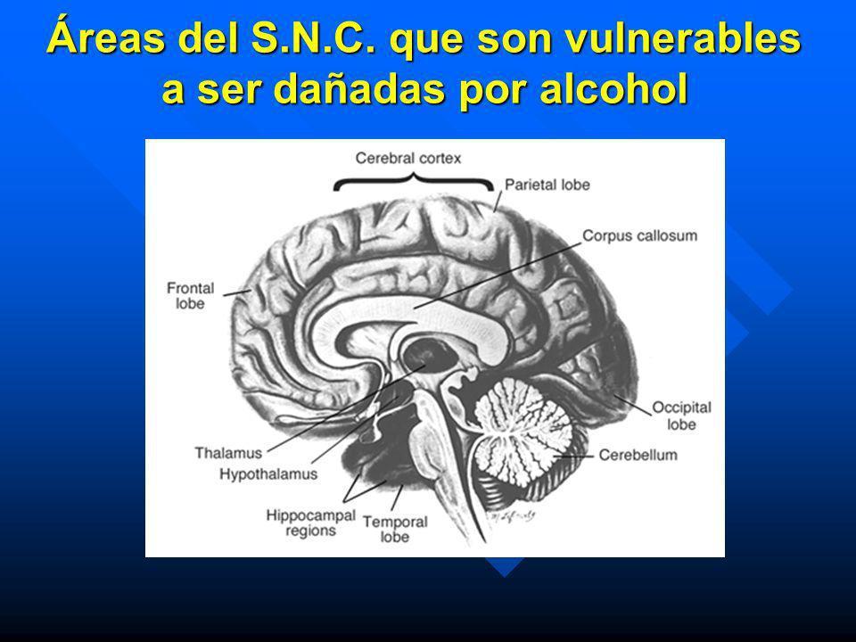 Si eres adulto y decides tomar alcohol: n Mejor no mezclar diversos tipos de bebidas n Si eres hombre, no sobrepases 3 Unidades de alcohol n Si eres m