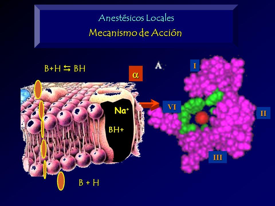 B+H BH B + H BH+ Na + Anestésicos Locales Mecanismo de Acción I II III VI