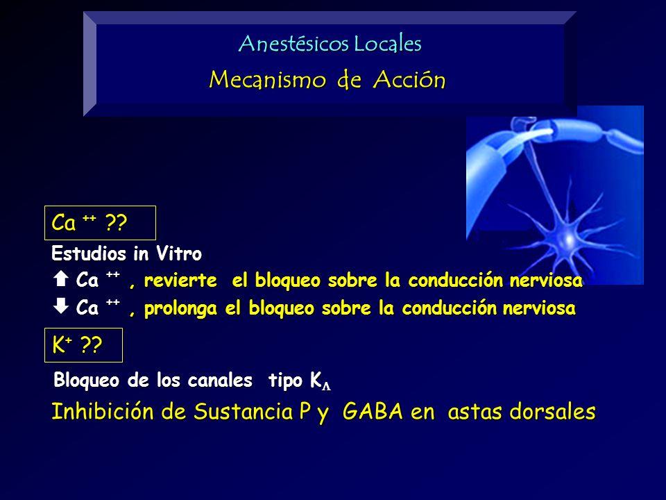 Ca ++ ?? Ca ++, revierte el bloqueo sobre la conducción nerviosa Estudios in Vitro Ca ++, prolonga el bloqueo sobre la conducción nerviosa K + ?? Bloq