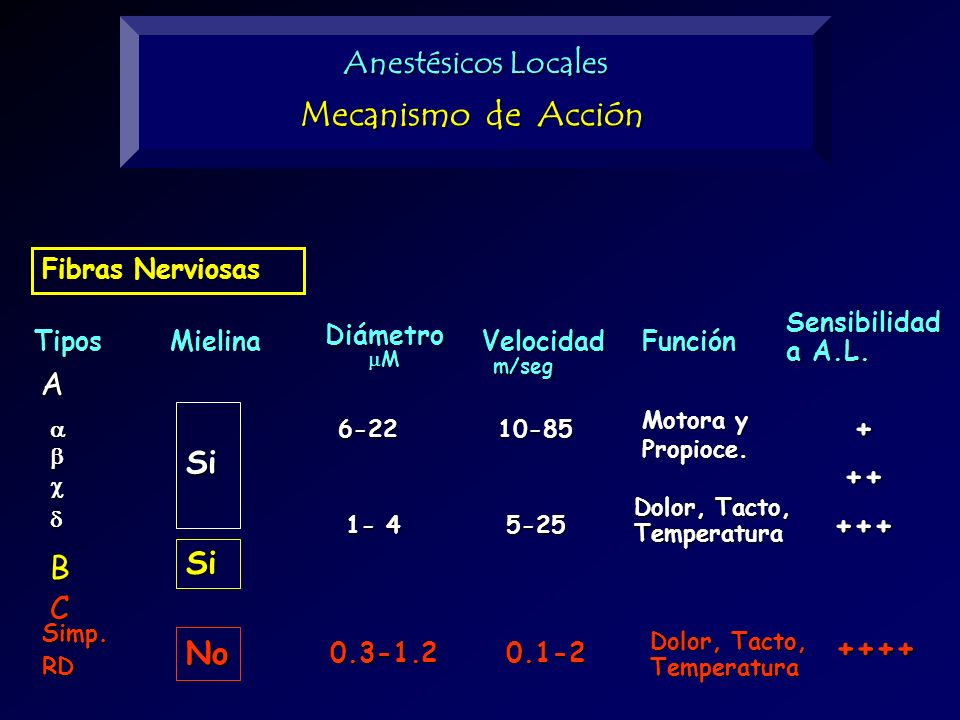 Fibras Nerviosas A B C Tipos Diámetro M Velocidad m/seg m/segFunción Sensibilidad a A.L. 6-22 1- 4 Mielina Si No Si Simp.RD 0.3-1.2 10-85 5-25 0.1-2 M