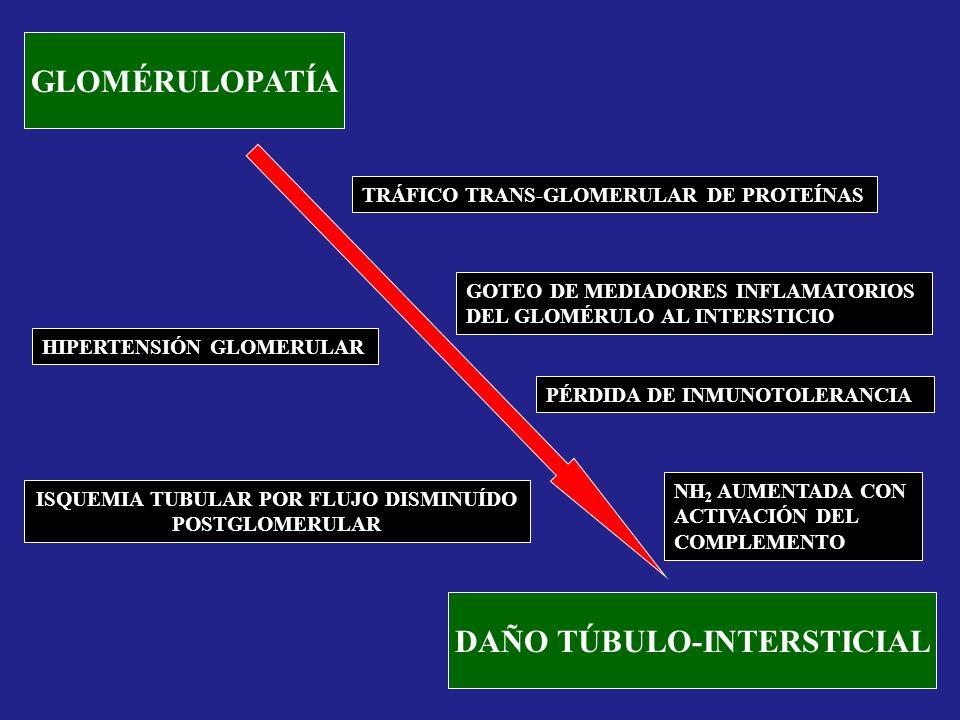 GLOMÉRULOPATÍA DAÑO TÚBULO-INTERSTICIAL TRÁFICO TRANS-GLOMERULAR DE PROTEÍNAS HIPERTENSIÓN GLOMERULAR ISQUEMIA TUBULAR POR FLUJO DISMINUÍDO POSTGLOMER