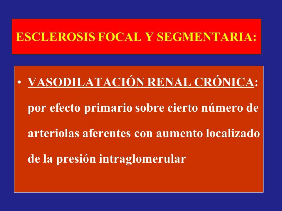 ESCLEROSIS FOCAL Y SEGMENTARIA: VASODILATACIÓN RENAL CRÓNICA: por efecto primario sobre cierto número de arteriolas aferentes con aumento localizado d