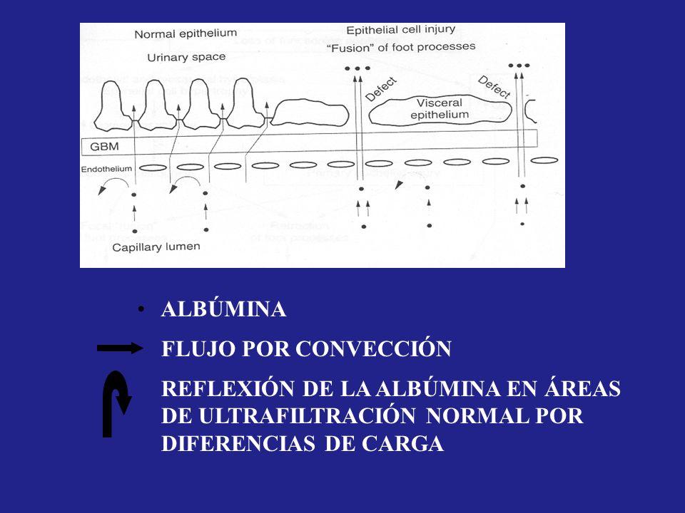 ALBÚMINA FLUJO POR CONVECCIÓN REFLEXIÓN DE LA ALBÚMINA EN ÁREAS DE ULTRAFILTRACIÓN NORMAL POR DIFERENCIAS DE CARGA