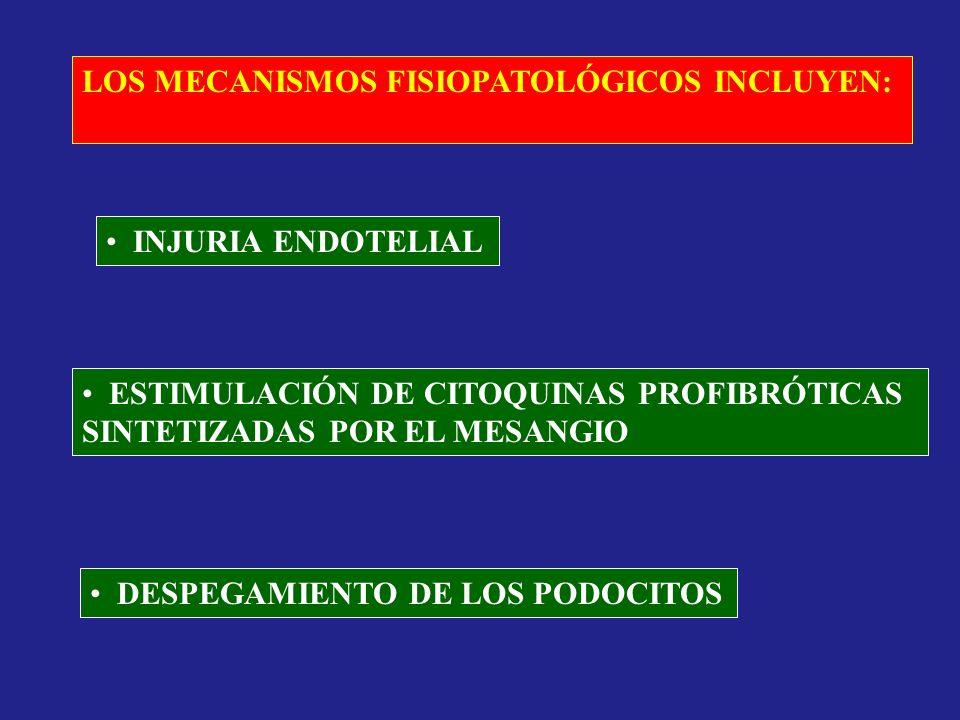 LOS MECANISMOS FISIOPATOLÓGICOS INCLUYEN: INJURIA ENDOTELIAL ESTIMULACIÓN DE CITOQUINAS PROFIBRÓTICAS SINTETIZADAS POR EL MESANGIO DESPEGAMIENTO DE LO