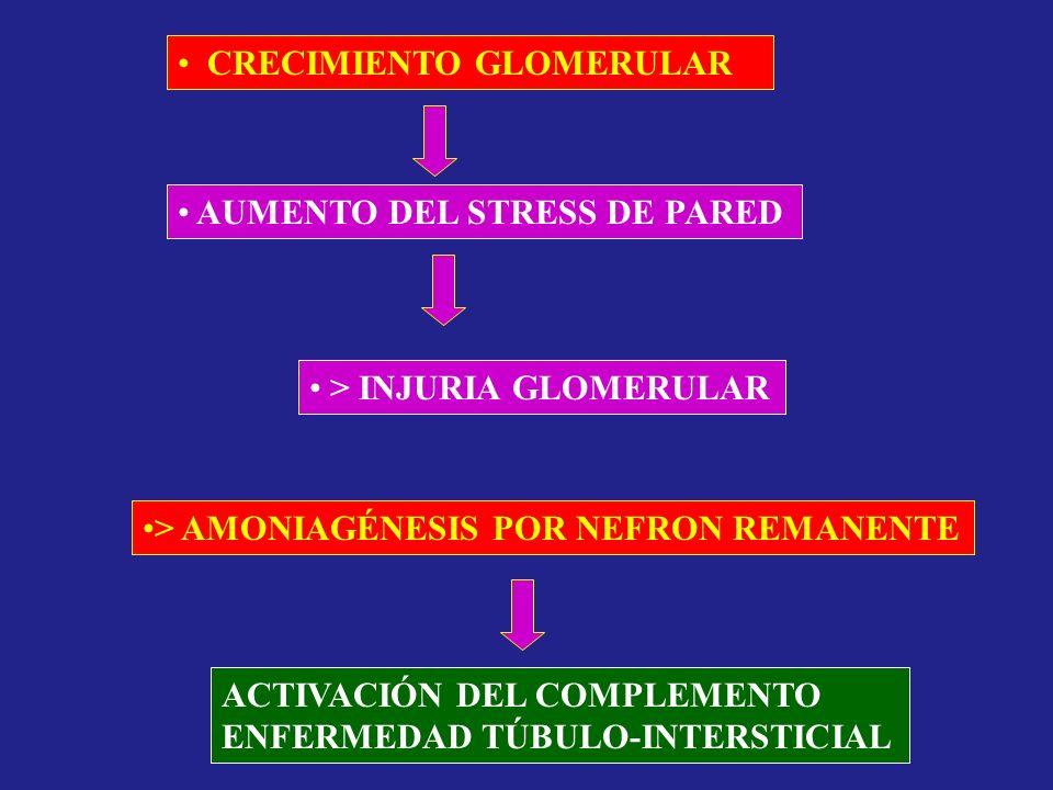 CRECIMIENTO GLOMERULAR AUMENTO DEL STRESS DE PARED > INJURIA GLOMERULAR > AMONIAGÉNESIS POR NEFRON REMANENTE ACTIVACIÓN DEL COMPLEMENTO ENFERMEDAD TÚB