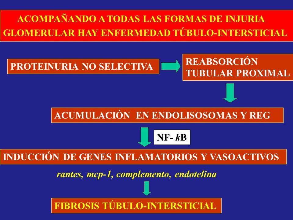 ACOMPAÑANDO A TODAS LAS FORMAS DE INJURIA GLOMERULAR HAY ENFERMEDAD TÚBULO-INTERSTICIAL PROTEINURIA NO SELECTIVA REABSORCIÓN TUBULAR PROXIMAL ACUMULAC